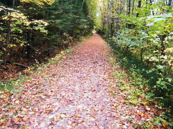 Magical carpet of leaves. :)