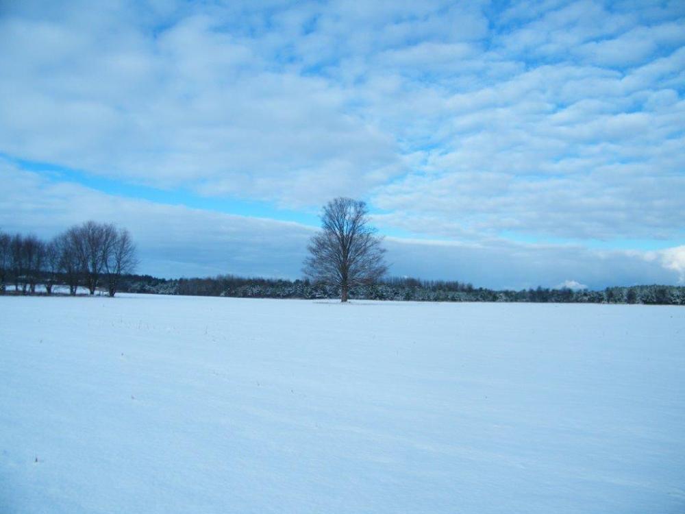 Winter's First Snowfall (1/2)