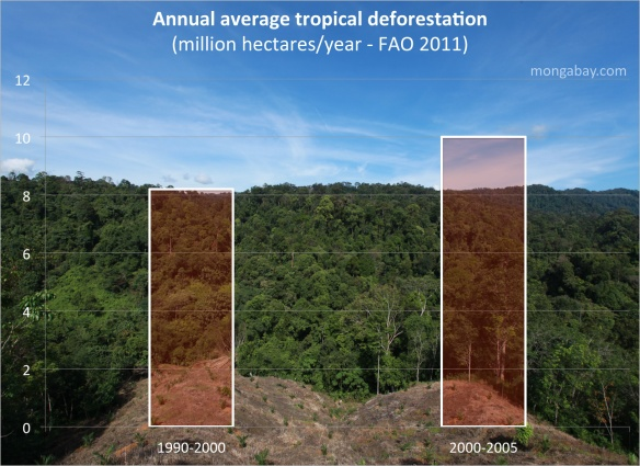 Each year global deforestation is increasing. Photo: mongabay.com