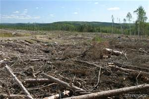 Clear-cutting of Canada's virgin boreal forest. Photo: greenpeace.org