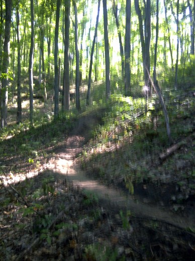 Copeland Forest...one of my two trail training runs