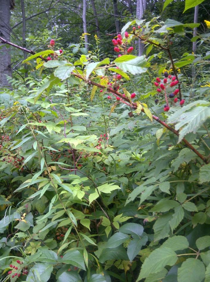 Even more big, plump berries