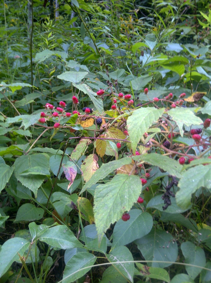 Look closely, and you will find what I am afraid of hidden among the brambles!