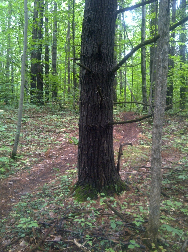 Away from the berry patch, a pix of my latest trail run.