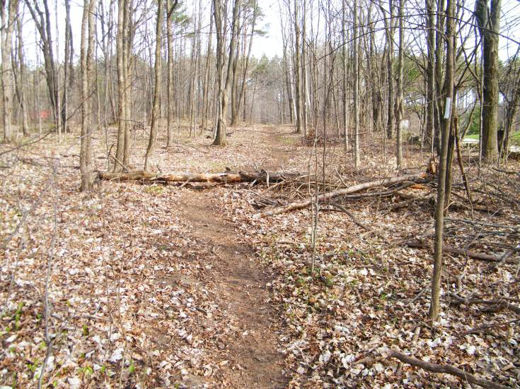 Lots of fallen logs on the course. This is shortly before the aid station where I announced to Caron I was running the 50k.