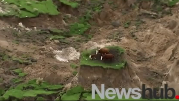 Another landslide stranded these cattle. Image Source!